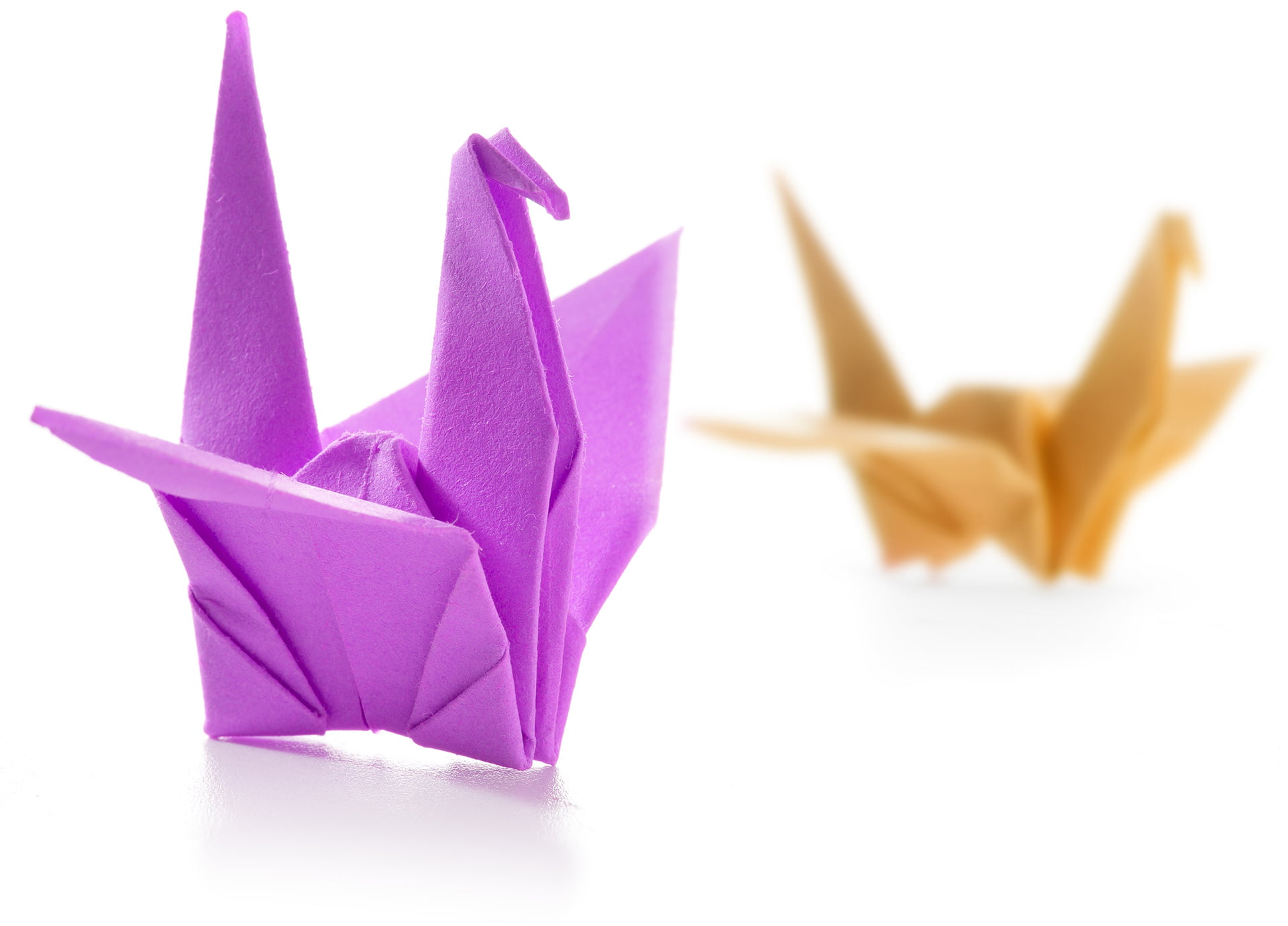 pair of colorful origami swans isolated on white p3sjp7c